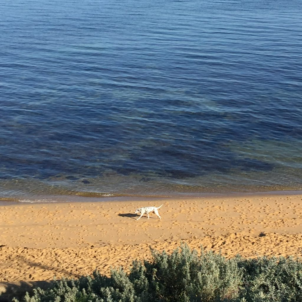 dog on black rock beach