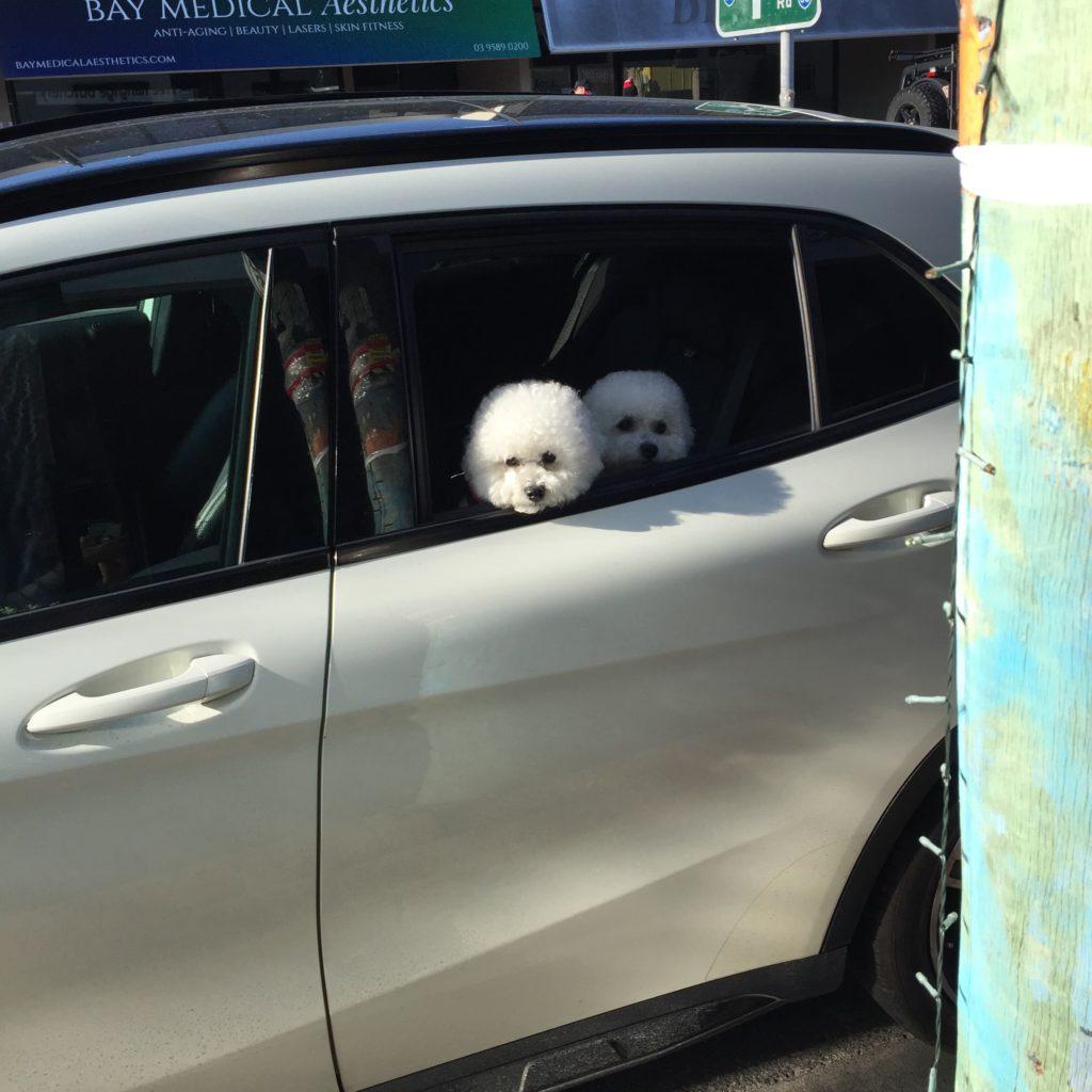 dogs in black rock