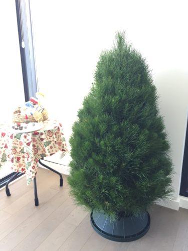 【メルボルン】クリスマスツリーを探して…